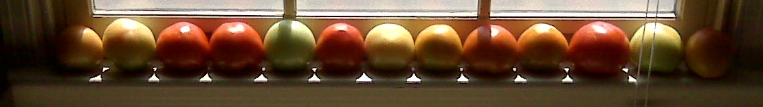 Row of multi-colored tomatoes